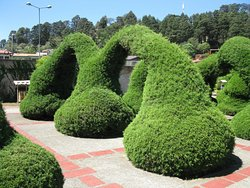 Costa Rica's Senor Scissorhands Topiary