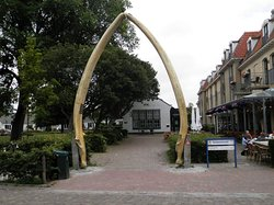 Whale Jaws
