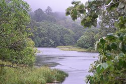 Gavi Forest