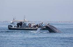 新港海岸探险观鲸之旅