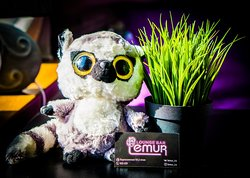 Lemur Lounge Cafe