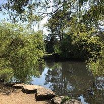 Coy Pond Gardens