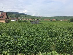 Domaine Humbrecht 1619