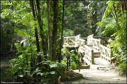 Uma das agradáveis pontes do parque