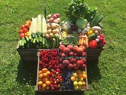 Elberta Farms Country Market