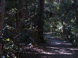 Iluka Rainforest Walking Track