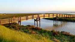Don Edwards San Francisco National Wildlife Refuge