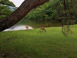 宝が池公園