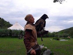 Falcon Farm Sunkar