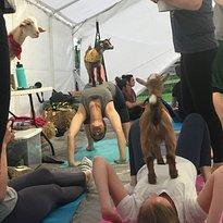 Goat Yoga Nashville