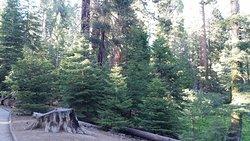 Kern River State Park
