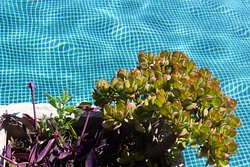Succulents by the pool