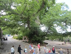 How the plane tree area looked in 2014.
