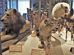 Musee d'histoire naturelle de La Rochelle