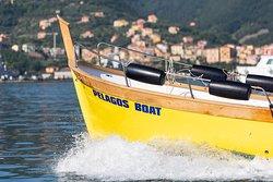 5 Terre Pelagos Boat Tours