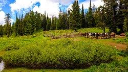 Corral at Calf Creek