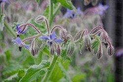 delicate bloom