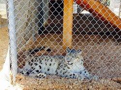 The Barry R. Kirshner Wildlife Foundation