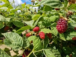 Rowell Bros Berry Stand