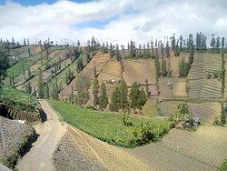 Ngadas Village