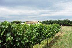 Prisoe Winery