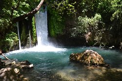 שמורת טבע נחל חרמון - בניאס