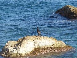 Paseo Ecologico Principe De Asturias