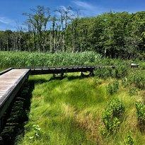 Frank Knowles-Little River Reserve Boardwalk Trail