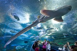 芭堤雅海底世界