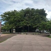 Nago Himpun Banyan Tree