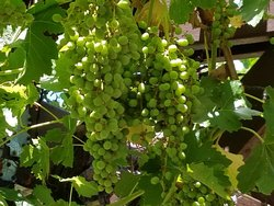 Arizona Winery Tours