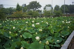 Hanyu City Mitagaya Agriculture Park (Cache Hanyu)