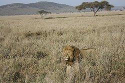Swala Safaris