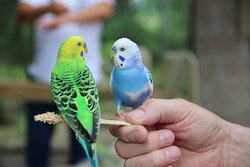 Hundreds of parakeets, etc, enclosed in a large area; visitors can enjoy them as they fly freely
