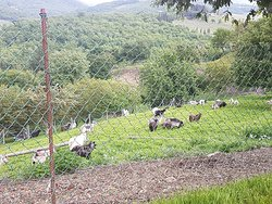 Kaschmirfarm in Radda