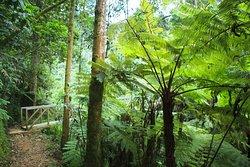 igishigishigi trail, Plant taxonomy basic history is amazing in educational tours