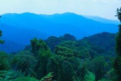 Visit Rwanda, we offer best Christmas Group Safaris Packages( Volcanoes,Akagera &Nyungwe)