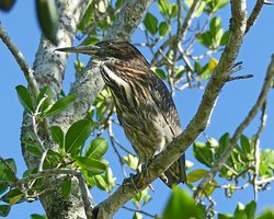 Tropical Treks Birding Adventures