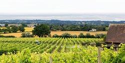 Halfpenny Green Wine Estate