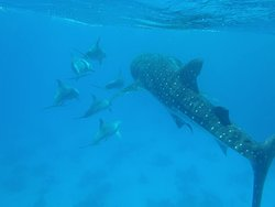Dolphins Welfare