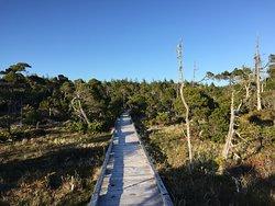 Kennedy River Bog Provincial Park