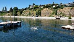 Gellatly Bay Aquatic Park
