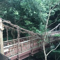 Monkey Kazura Bridge