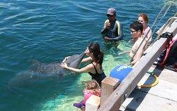 Dolphin Lodge Bali