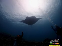 Manta Diving in Ishigaki Island - Aloha Divers Okinawa