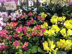 ถนนตลาดดอกไม้