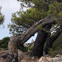 Cabo de Formentor (Cap de Formentor)