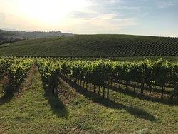Enoteca dalle Vigne