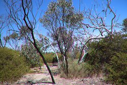 Aldinga Scrub Conservation Park
