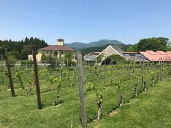 St.Cousair Winery